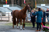 Four Star  First Horse Inspection